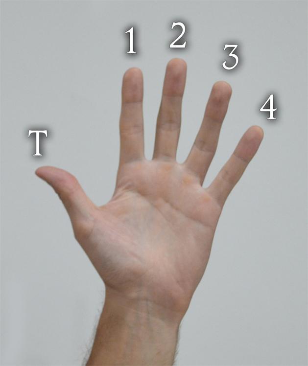 Hand website